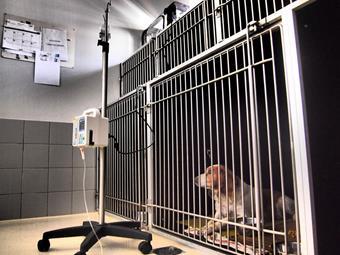 Chenil, clinique vétérinaire de la Fure
