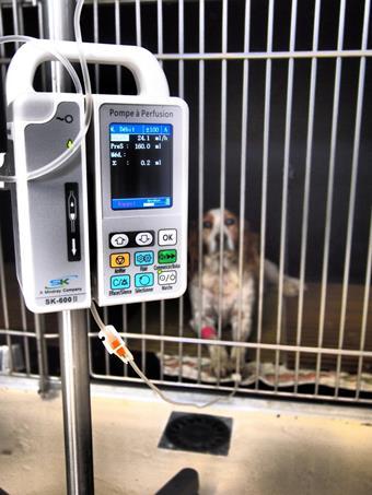 Chenil d'hospitalisation, clinique vétérinaire de la Fure