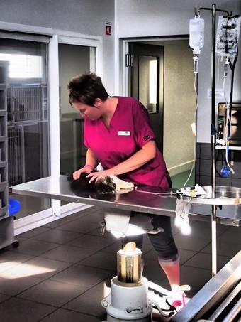 Salle de préparation, clinique vétérinaire de la Fure