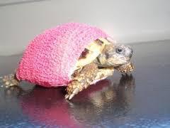 Consultation tortue, clinique vétérinaire de la Fure