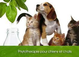 Phytothérapie, clinique vétérinaire de la Fure