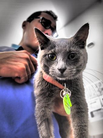 Service consultation, clinique vétérinaire de la Fure